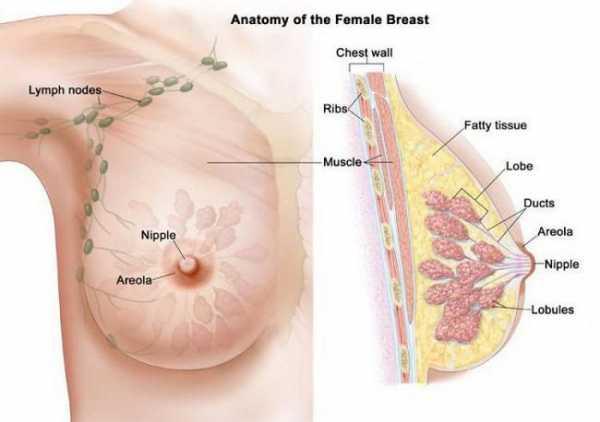 Женские груди с большими сосками и ореолом — 7